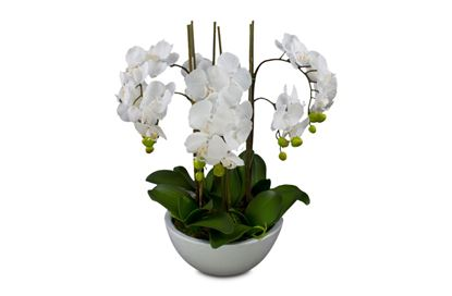 Picture of Glamour Orchid White