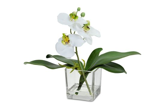 Picture of Cosy Orchid